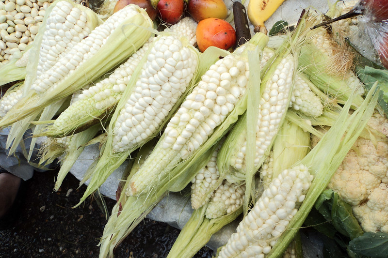 corn_5364432193_o.jpg