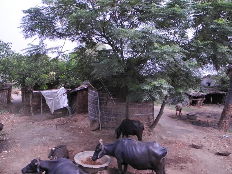 india&nepal2011 268.jpg