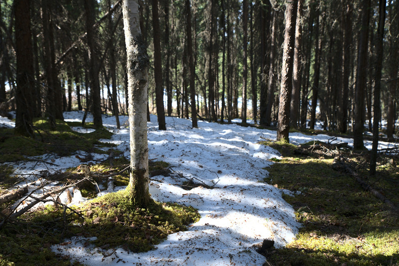 Melting forest