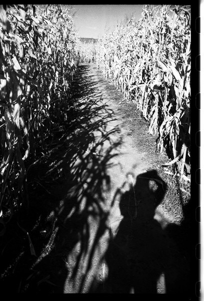 cornshadows.jpg