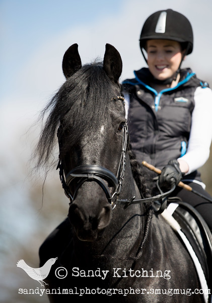 Friesian Experience Ashley Apr 2015