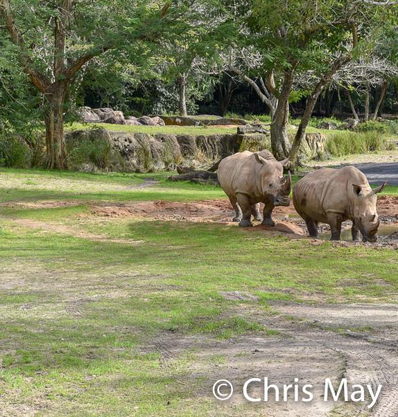 Animal Kingdom 18-132.jpg
