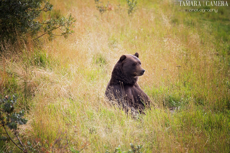 Bear2-8-2.jpg