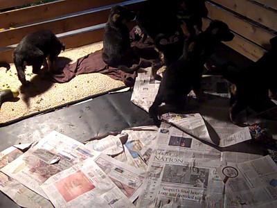 Puppies Video