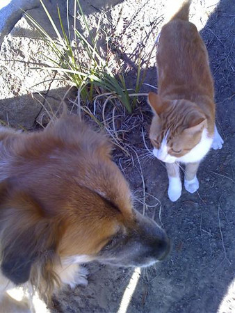 2008/08/29 >> Sandy and a Cat