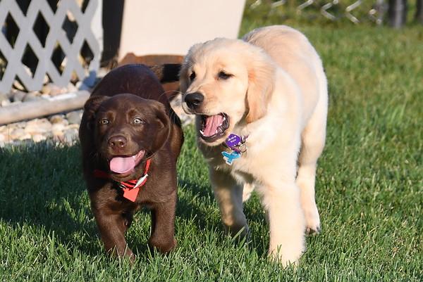 Piper & Colt September 2017