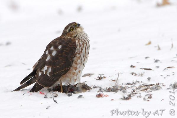 Birding 2013 December