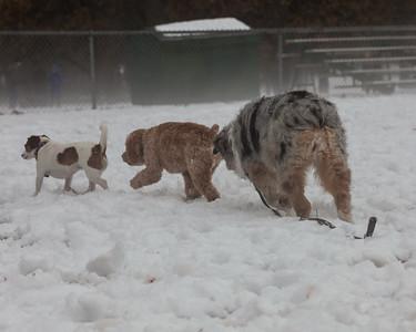Fernridge popup dog park