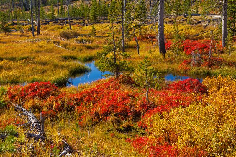 Fall Tundra, Yellowstone National Park