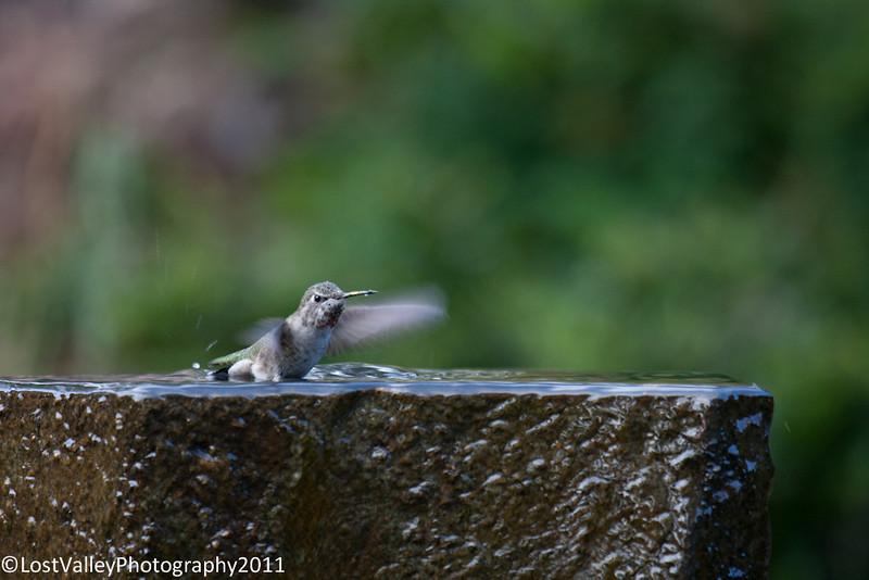 Birds and Fountain-2958.jpg