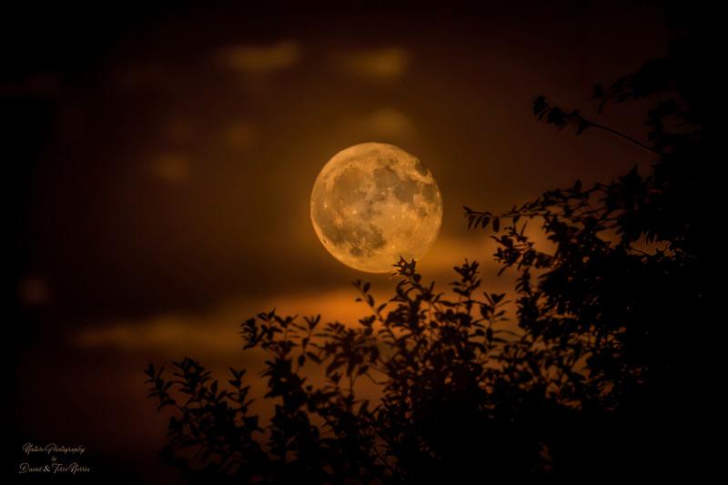 Full Sturgeon Moon TN205764.jpg