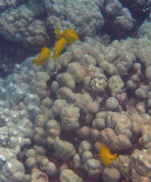 421- 20080416- Hawaii 20-Snorkelling IMG_0572.jpg