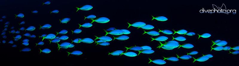 Sulug Reef, West Borneo, Malaysia