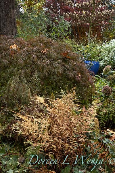 Dietrick fall garden_2061.jpg