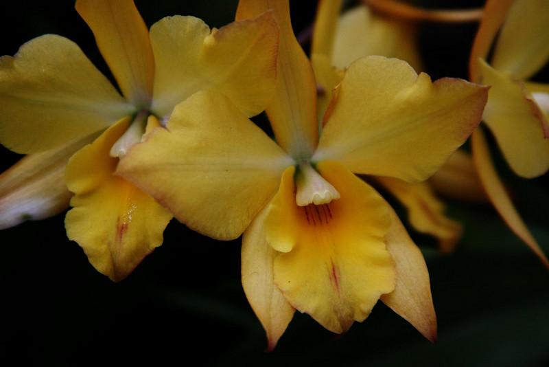 orchids 09 136.jpg