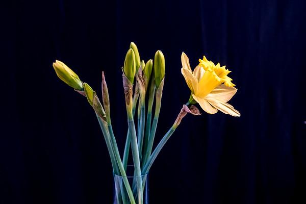 Flower_Home_3_21_2017