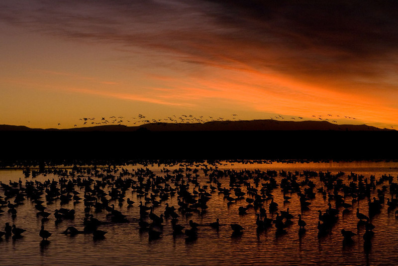 Sun rise, day two. The nearby snow geese are starting to lift off.