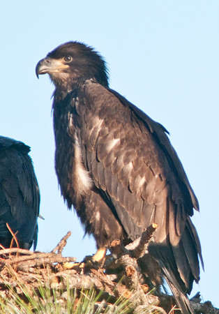 Palm Bay Eagle's Nest - March 11, 2011