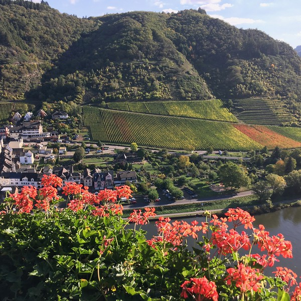 View of Cochem from castle.