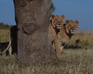 2015 Masai Mara