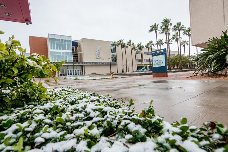 Fall 2017 snow at Texas A&M University - Corpus Christi.