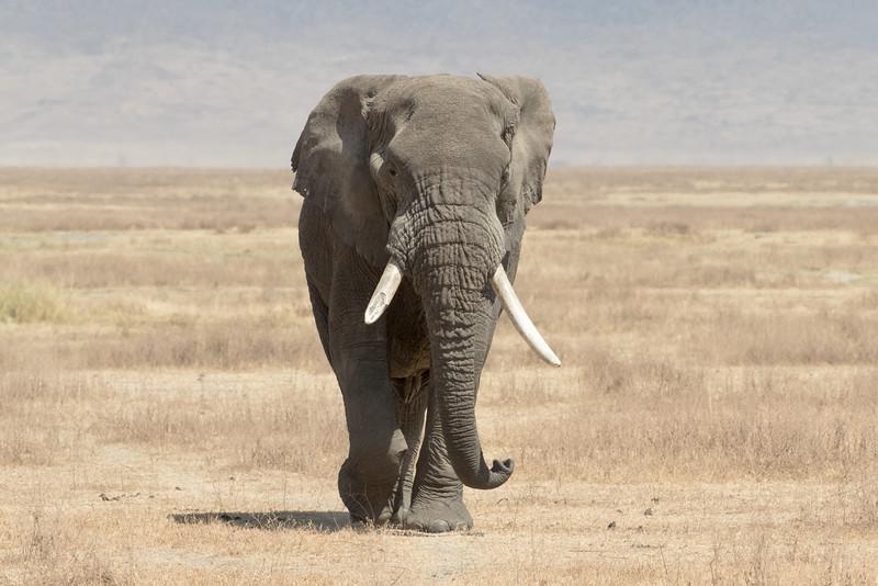 Africa - 101816 - 7134.jpg