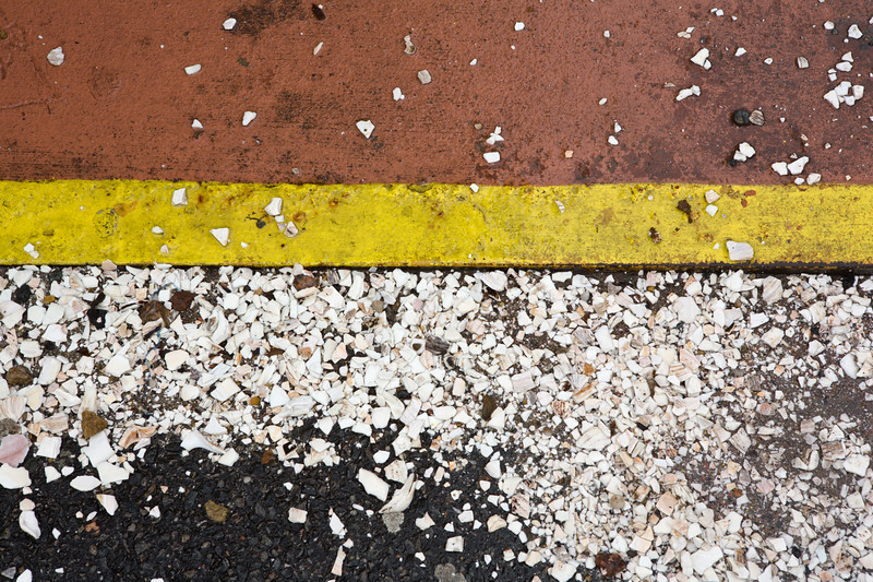 Seashells Underfoot