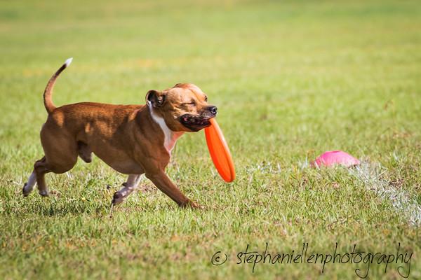 _MG_2577Up_dog_International_2016_StephaniellenPhotography.jpg