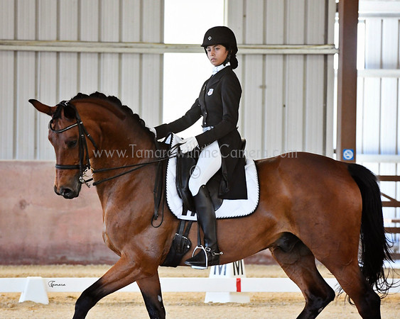 Dressage at the Gaits - June 2-4, 2017