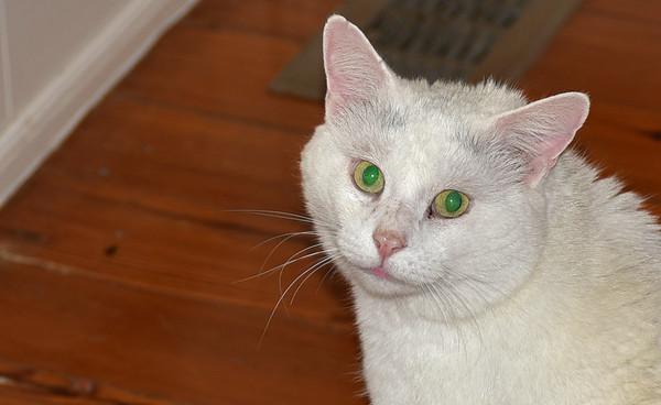Zombie Cat 04-21-15