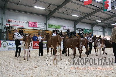 UK Dairy Expo Shorthorn 2015