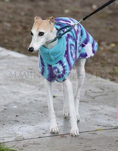 3-3-18 Dog 37
