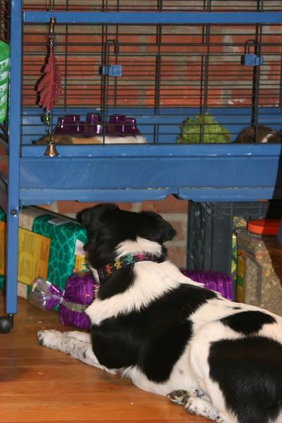 Bessie plots how to get the gergils