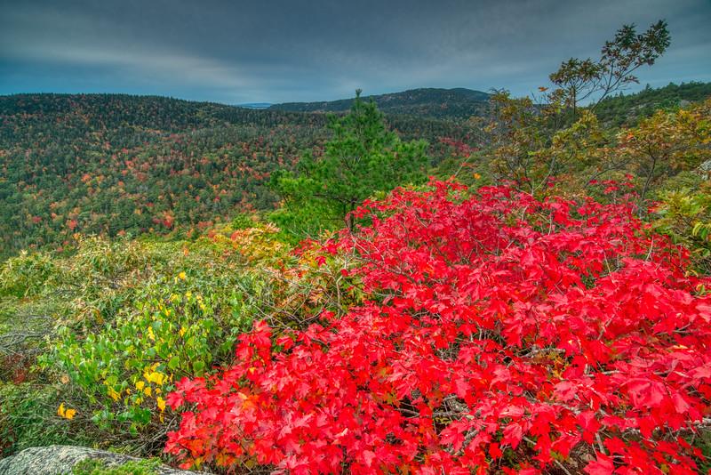 Acadia NP Fall 2019-51.jpg