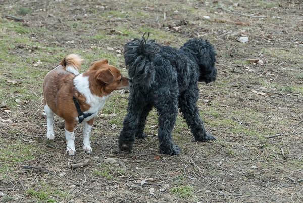 2013-03-02 Morris County Dog Park