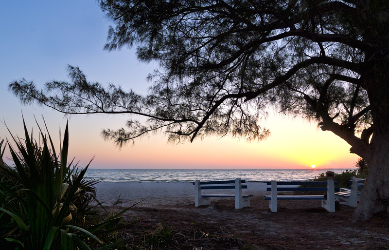 Old Tree, Benches and the Morning Sun, Anna Maria Island, FL (30204)