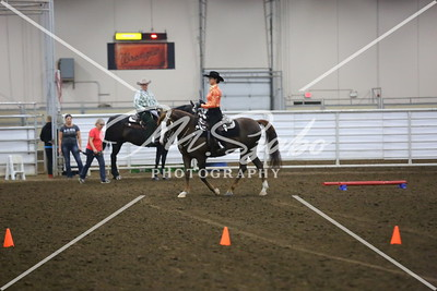 2017 Alberta Morgan Horse Show