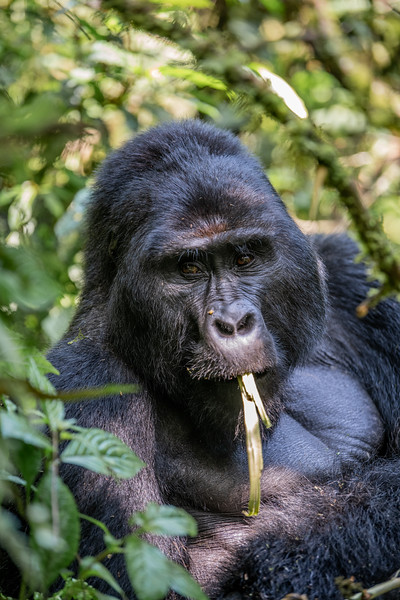 Uganda_T_Gor-308.jpg