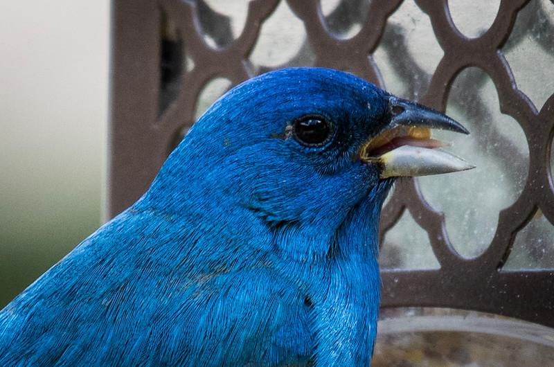 05-10-2019-birds_(11_of_12).jpg