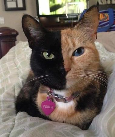 Pretty pattern cats