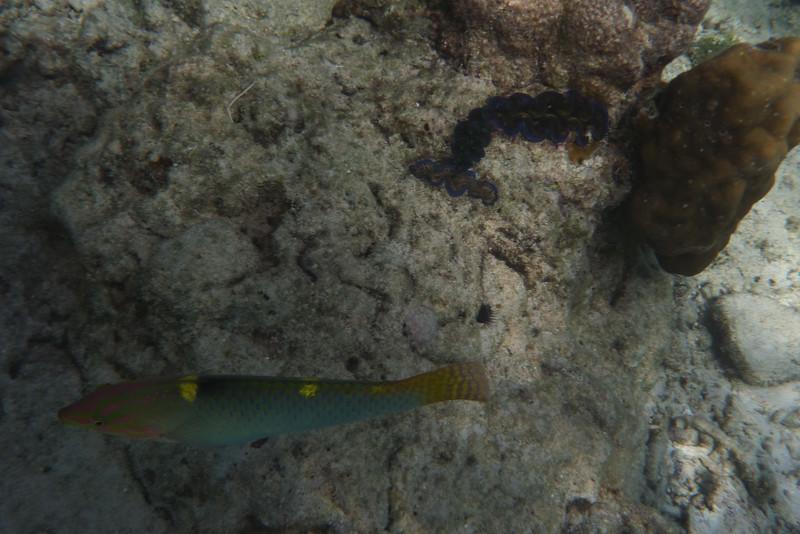 Jeszcze troche rybek ze snorklowania