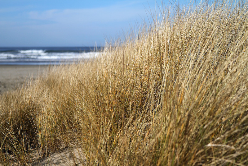 The dune grasses were gorgeous in the winter sun