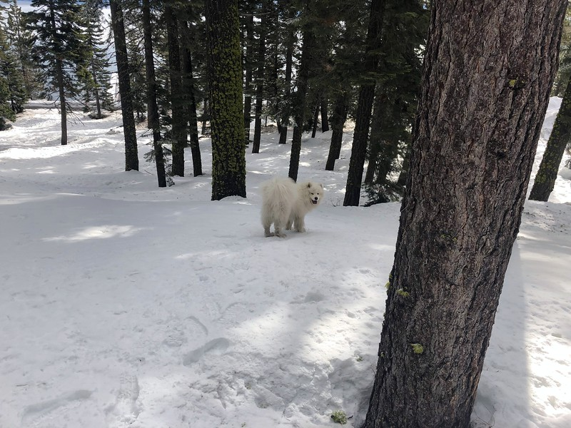 2019-03-21-0008-Trip to Tahoe with Dogs-Lake Tahoe-Teddy the Dog.JPG