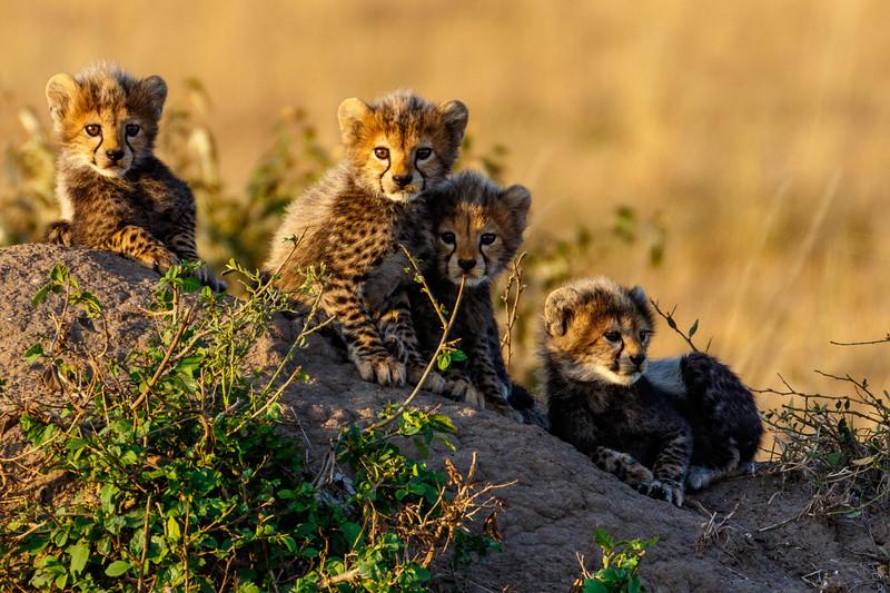 Kenya 2015-06242.jpg