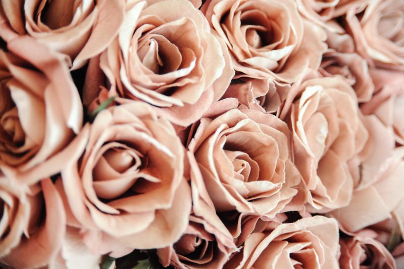 Roses Mauve Wall AdobeStock_125582841.png