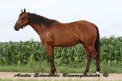 Bocks Oak Hill QH