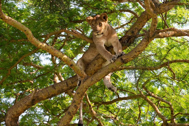 Uganda_T_QE-1.jpg