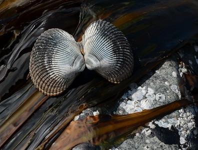 Stones, shells, driftwood