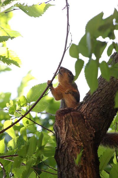 Squirrel above me