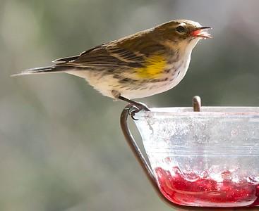 Winter birds 2-20-15